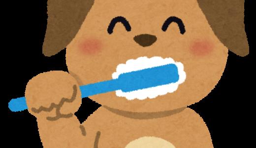 【一般飼い主様向け】愛犬のための歯磨きセミナー開催します❗