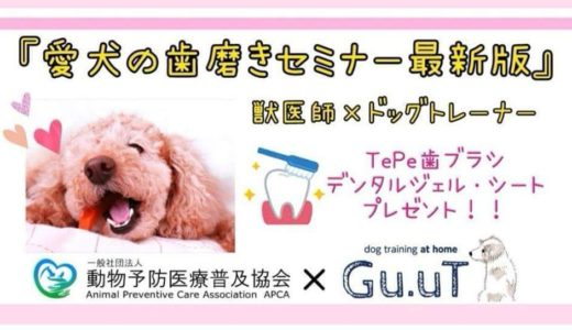 愛犬の歯磨きセミナー2019年最新版🐶