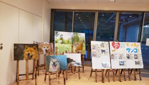 神奈川県動物愛護センターを見学!
